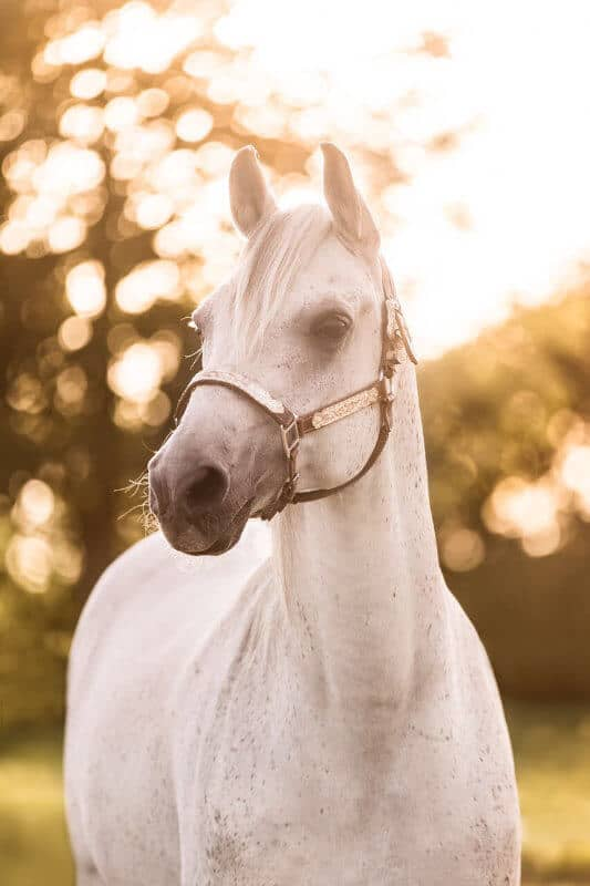 Dickie, mein ältestes Pferd